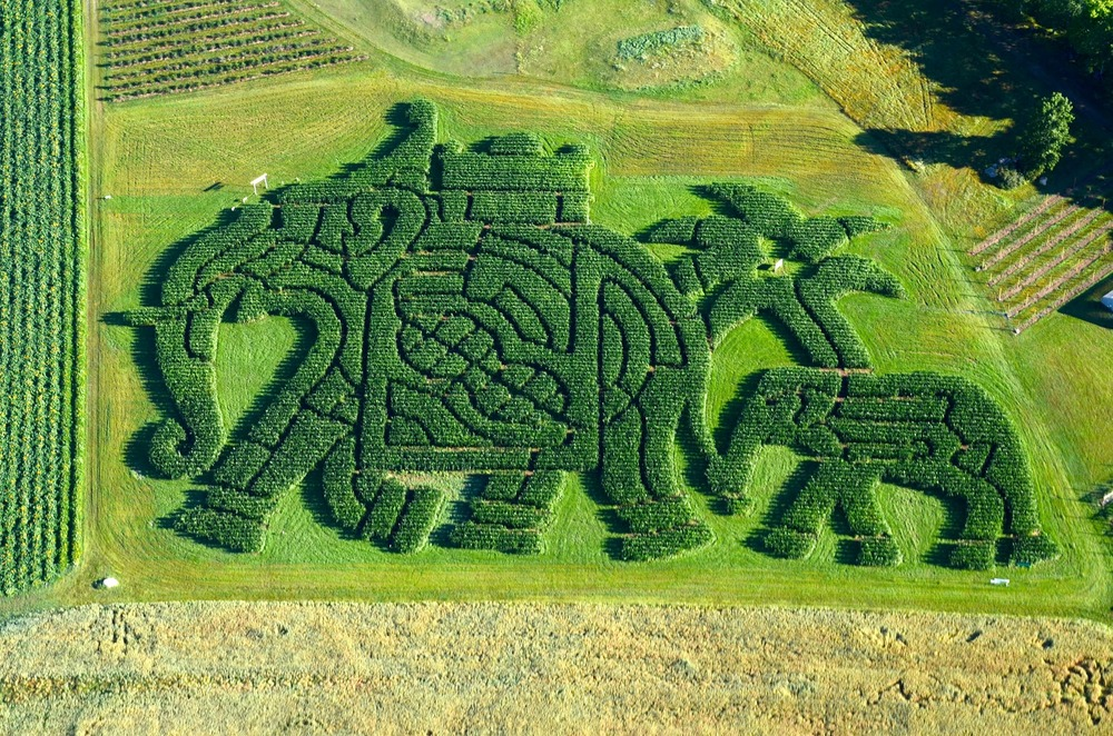 Maze Photo Edited.jpg