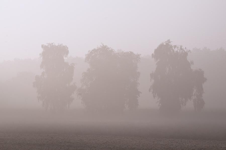 13-07-26-Renkenberge-Nebel_0013.jpg