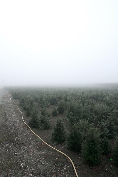 12-09-04-Fog_0011.jpg
