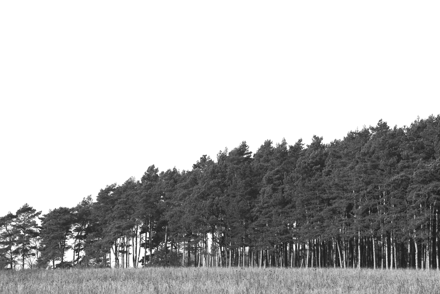 15-02-14-Am-Turm_0036.jpg