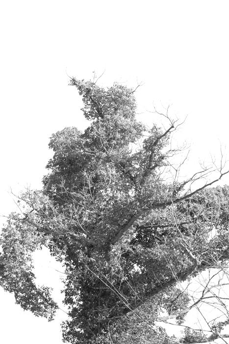 15-03-08-Wassills_0014.jpg