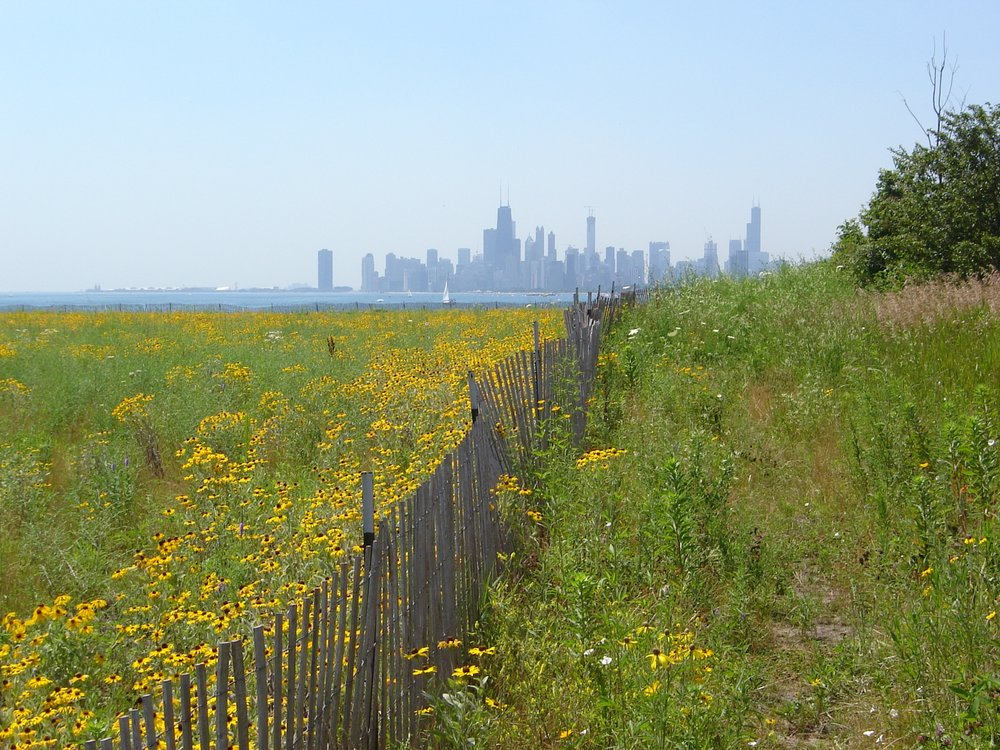 ChicagoSkylineFromMontrose.jpg