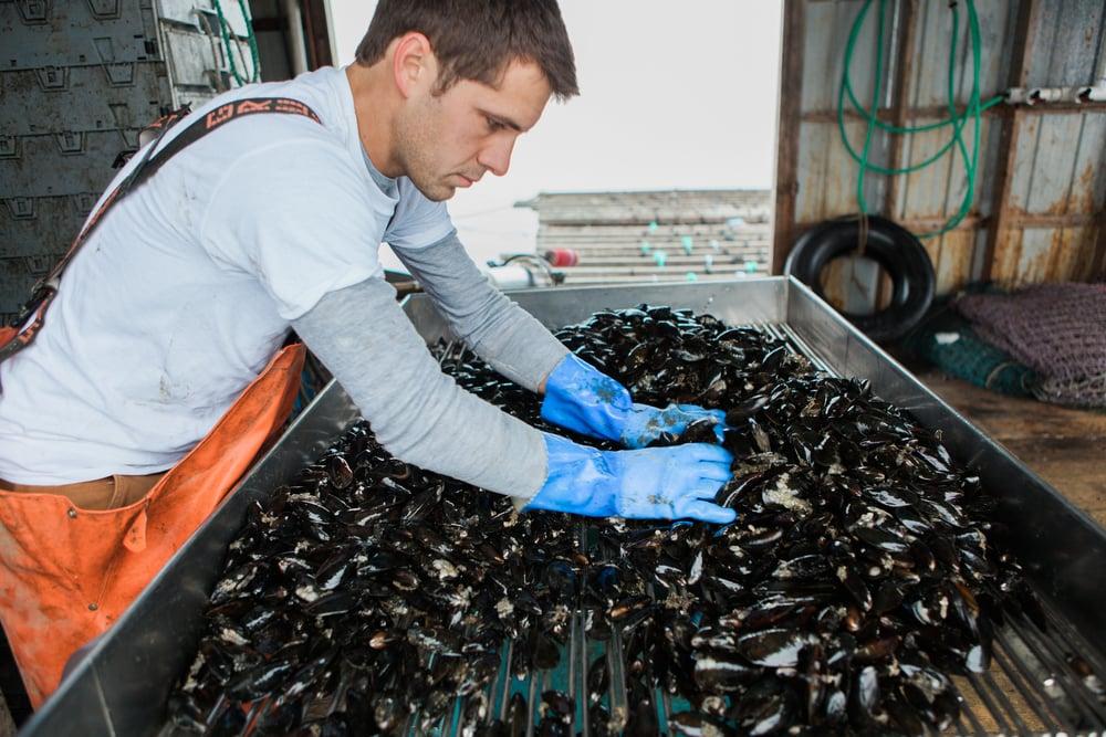 Bangs-Island-Mussels-10.jpg