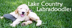 Lake Country Labradoodles
