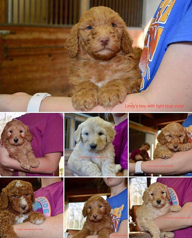 Lindy's pups 🎉