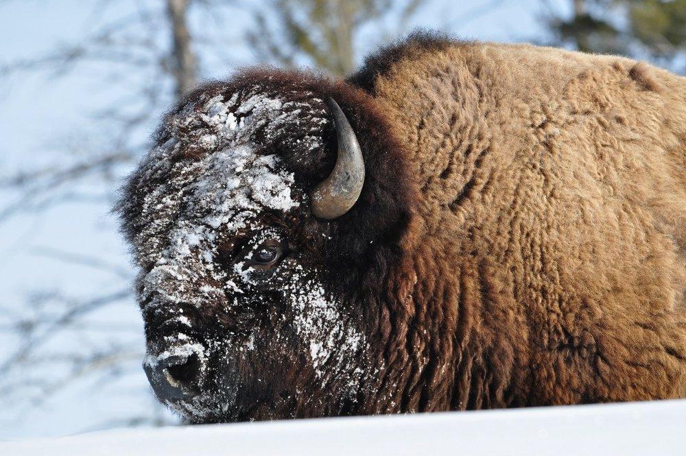 Yellowstone National Park cr: John Walton