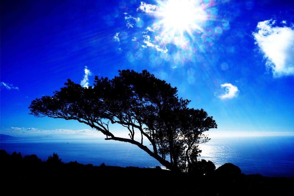 Mount Tamalpais State Park, California, December 2012