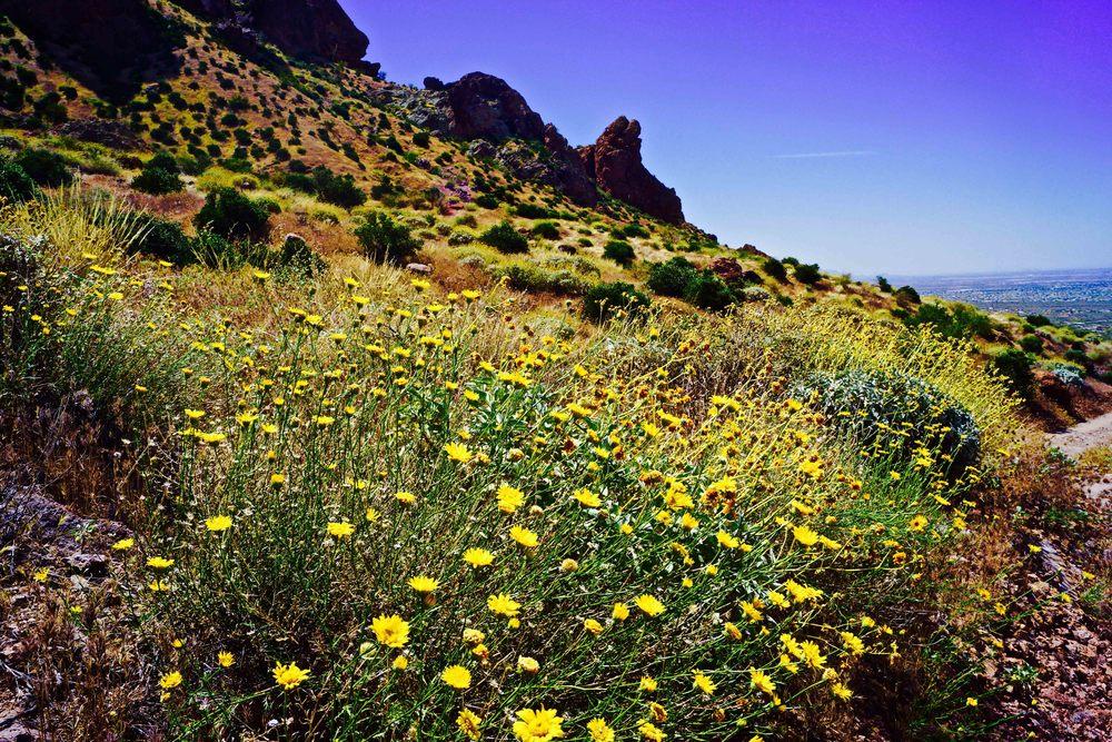 Superstition Mountains, Arizona, April 2015