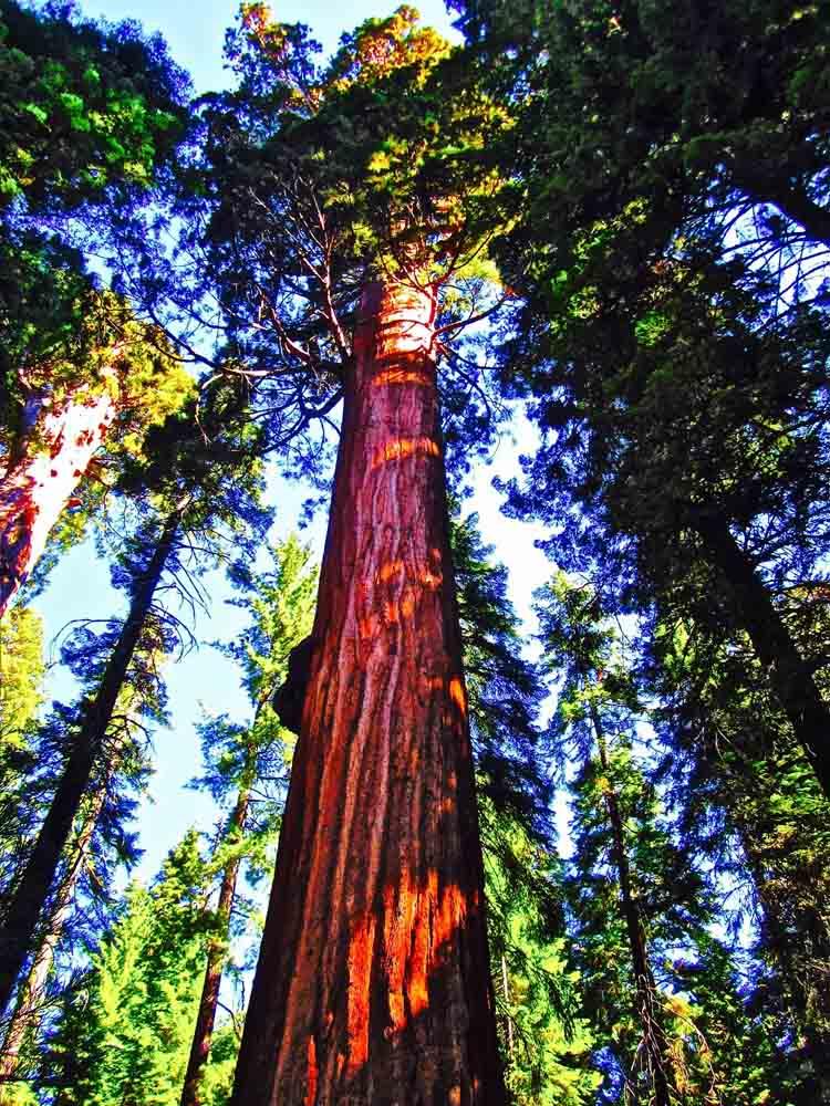 Muir Woods, California, September 2011