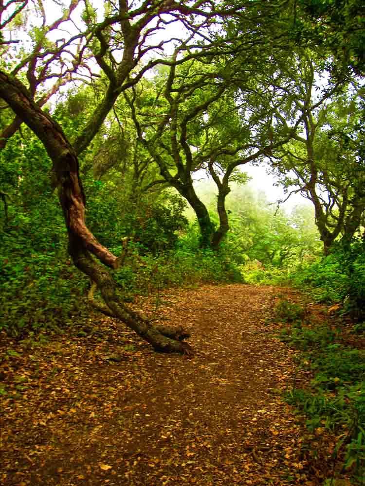 Andrew Molera State Park, California, August 2009