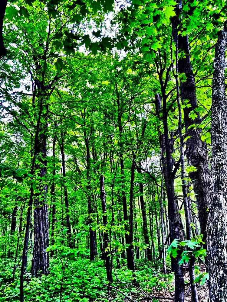 Maybury State Park, Michigan, May 2015