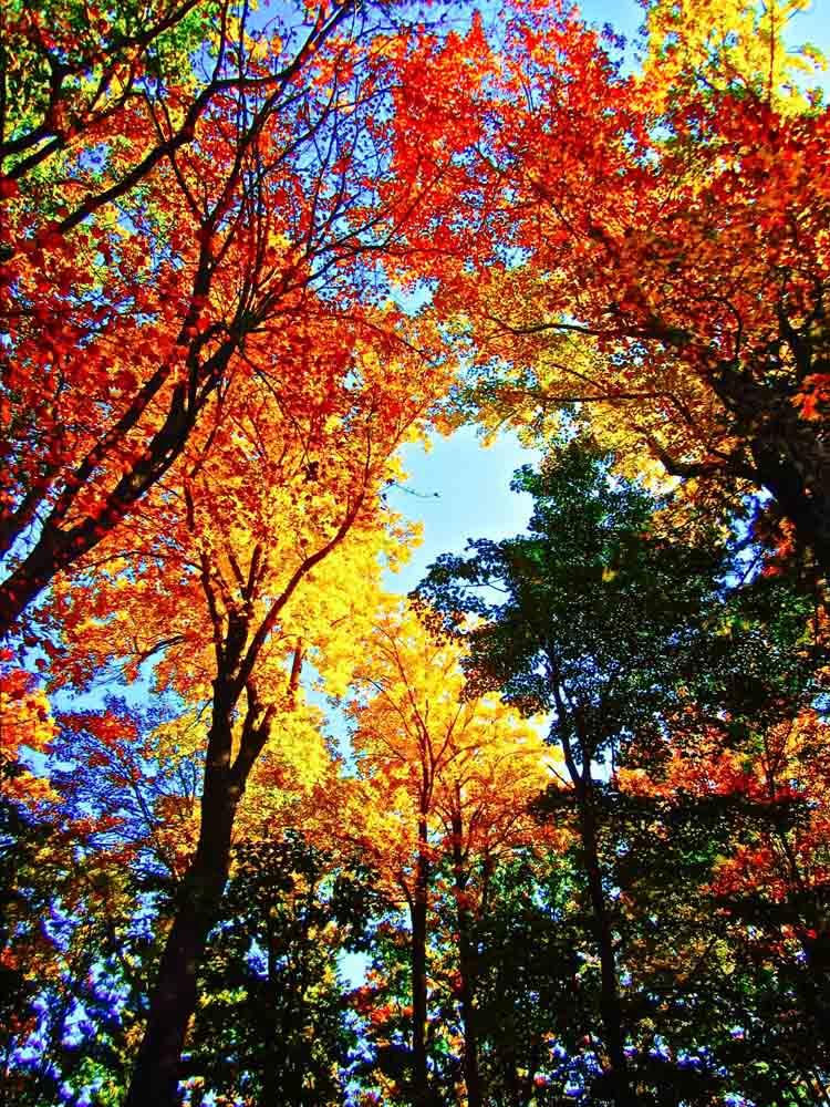 Saugatuck, Michigan, October 2012