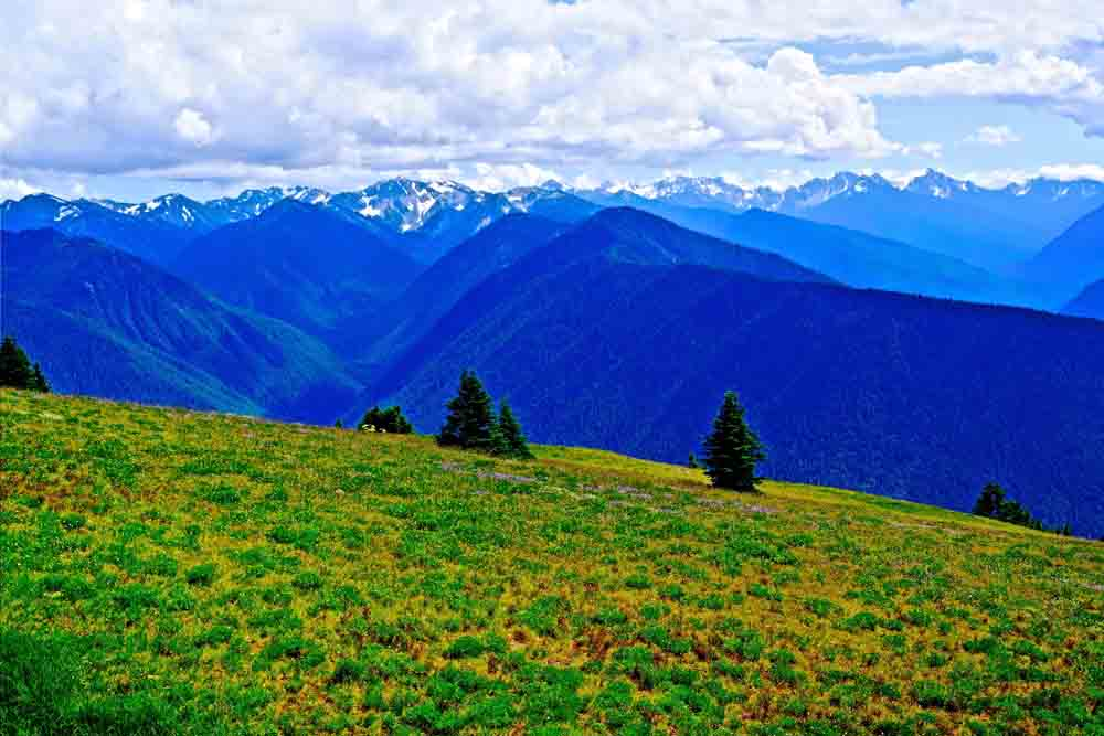 Hurricane Ridge, Olympic National Park, July 2014