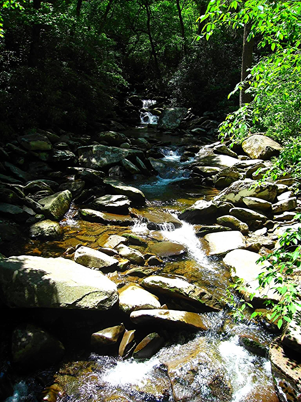 Great Smoky Mountains, Tennessee, May 2010