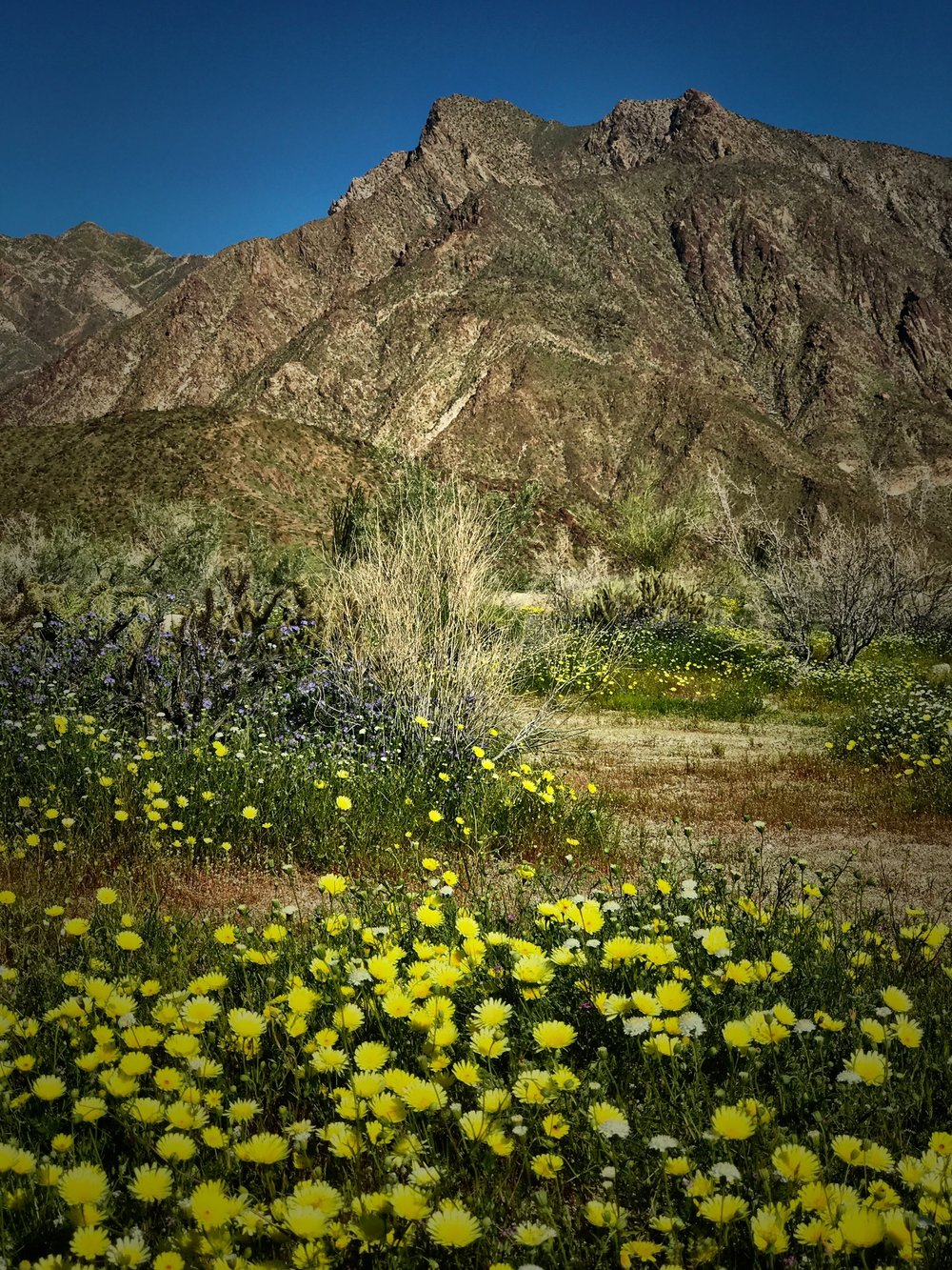 Anza-Borrego Desert State Park, March 2017
