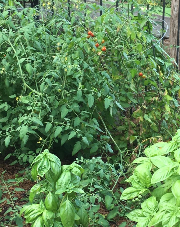 garden11.jpg