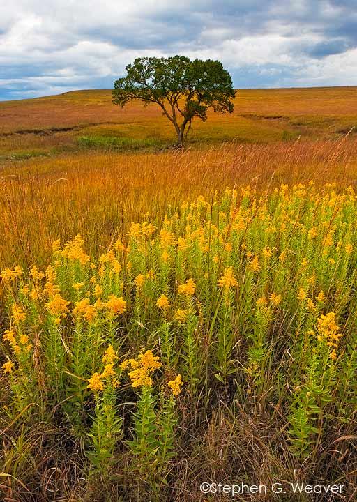 prairie4.jpg