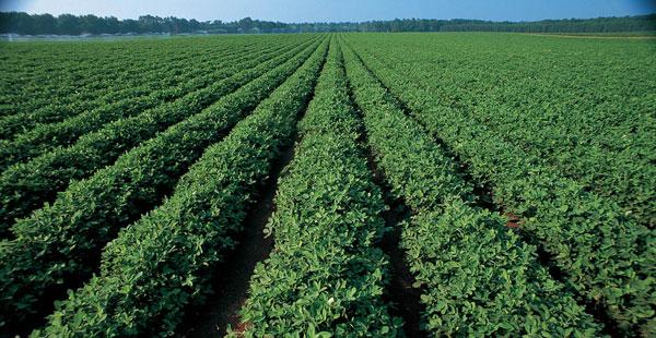 crop1.jpg