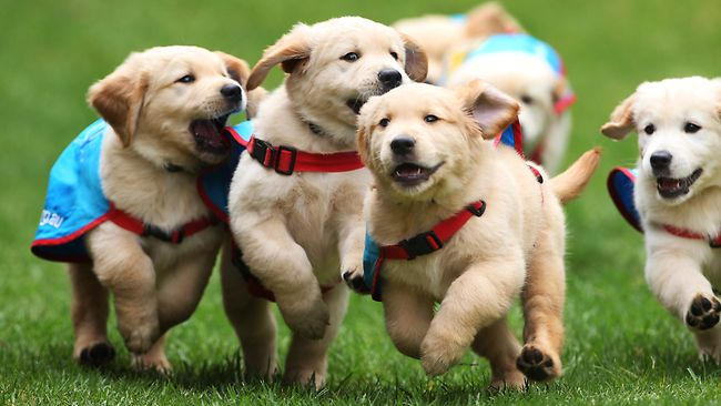 Image result for Assistance dogs