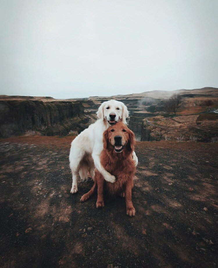 dog best friends.jpg