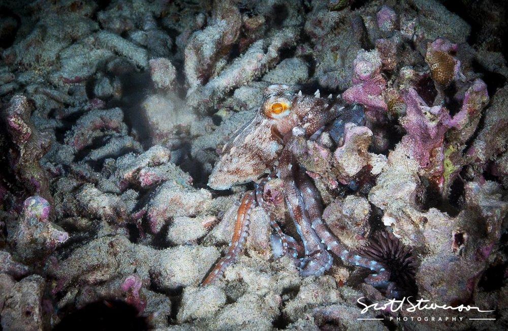 Day Octopus-1.jpg