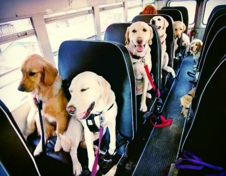 c84598c291411b331f5e20342c950102--school-buses-dog-school.jpg
