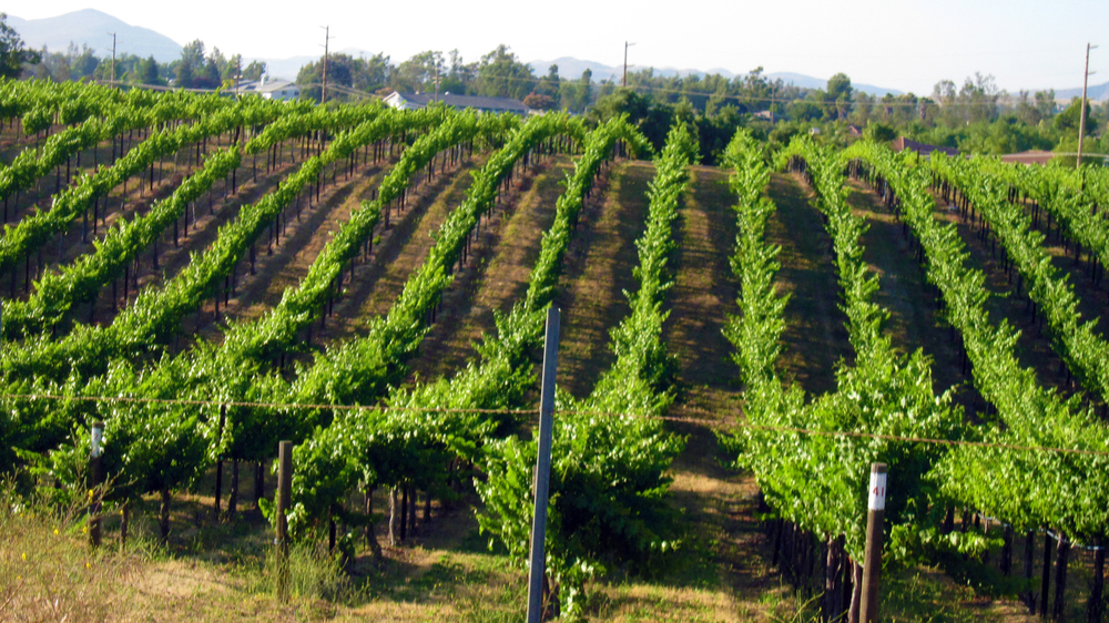 proj-resi-vineyard2.jpg