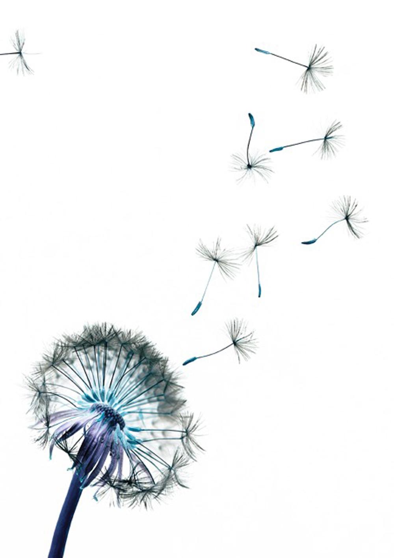 Autumn Study: Dandelion