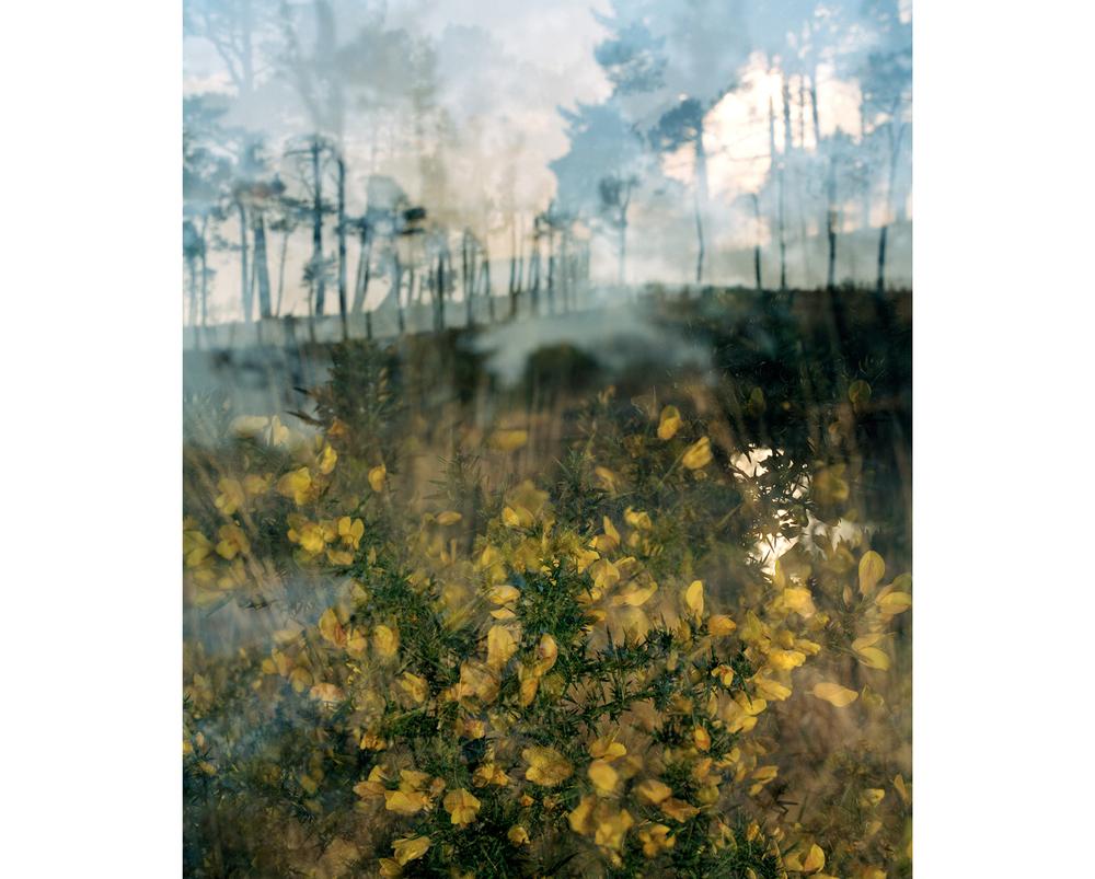 Around The Landscape - 3
