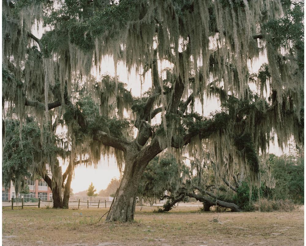 Untitled, Florida, 2011