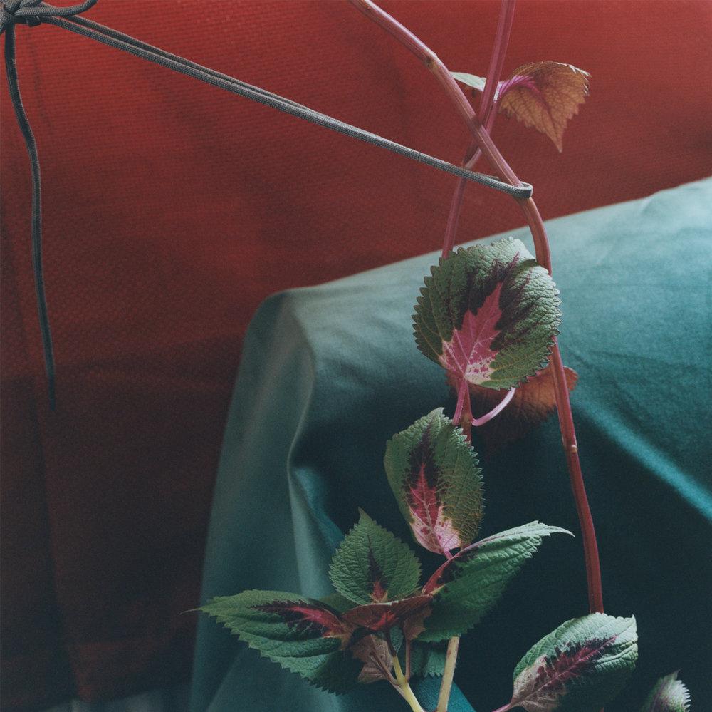 Plant #11, Bethnal Green, 2016