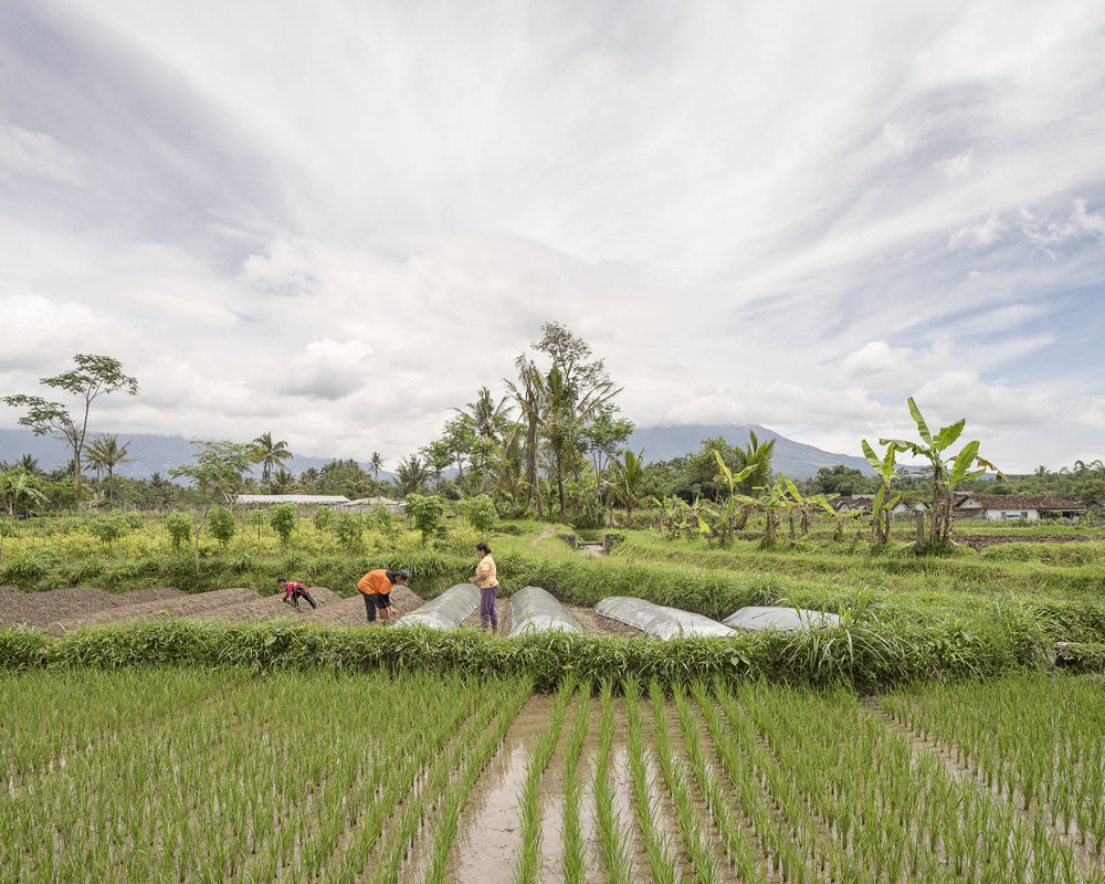 (Isidro Ramirez) Rice and chilli fields in Krinjing Village, Magelang, Central Java.jpg