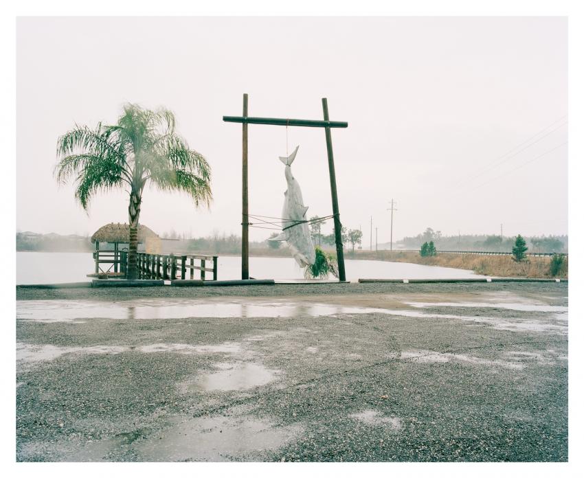 Spencer Murphy - Shark, Highway 27, Florida, 2011