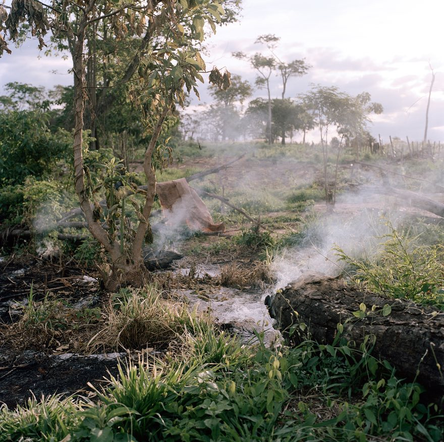 - 'Burned traces of the Guayaqui Cuá community after the 22 peasant families were evicted'