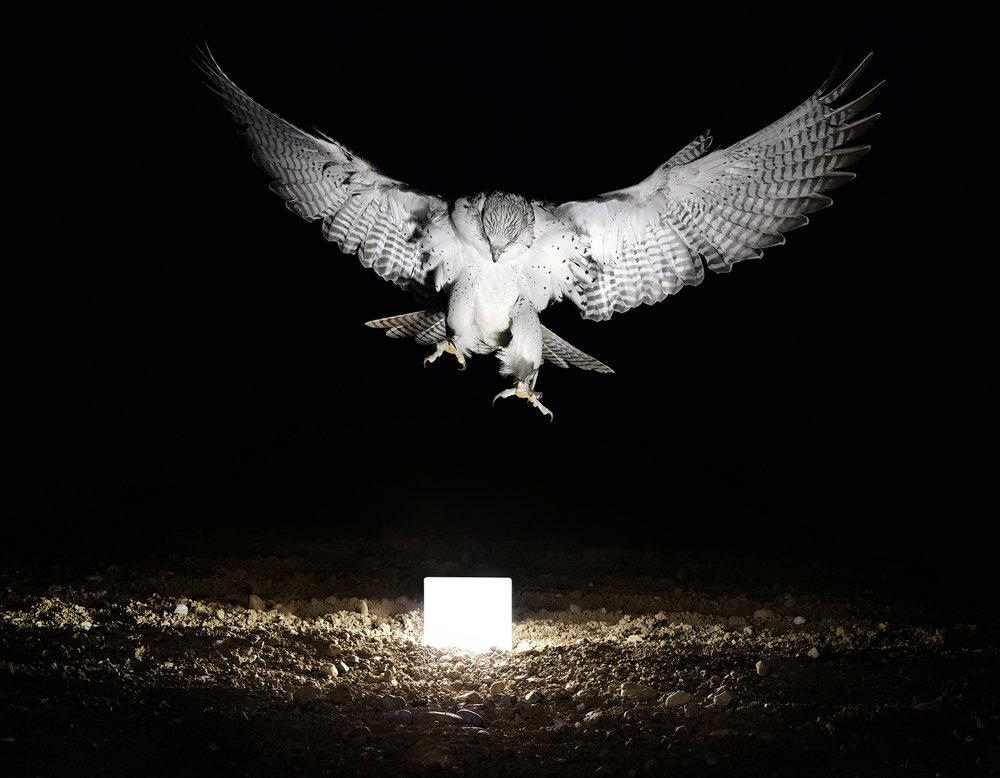 Lightanimals_falcon_Lozza.jpg