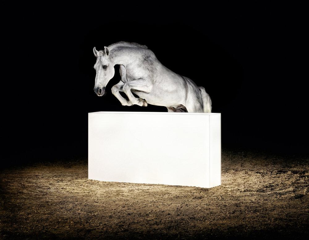 Lightanimals_horse_Lozza.jpg