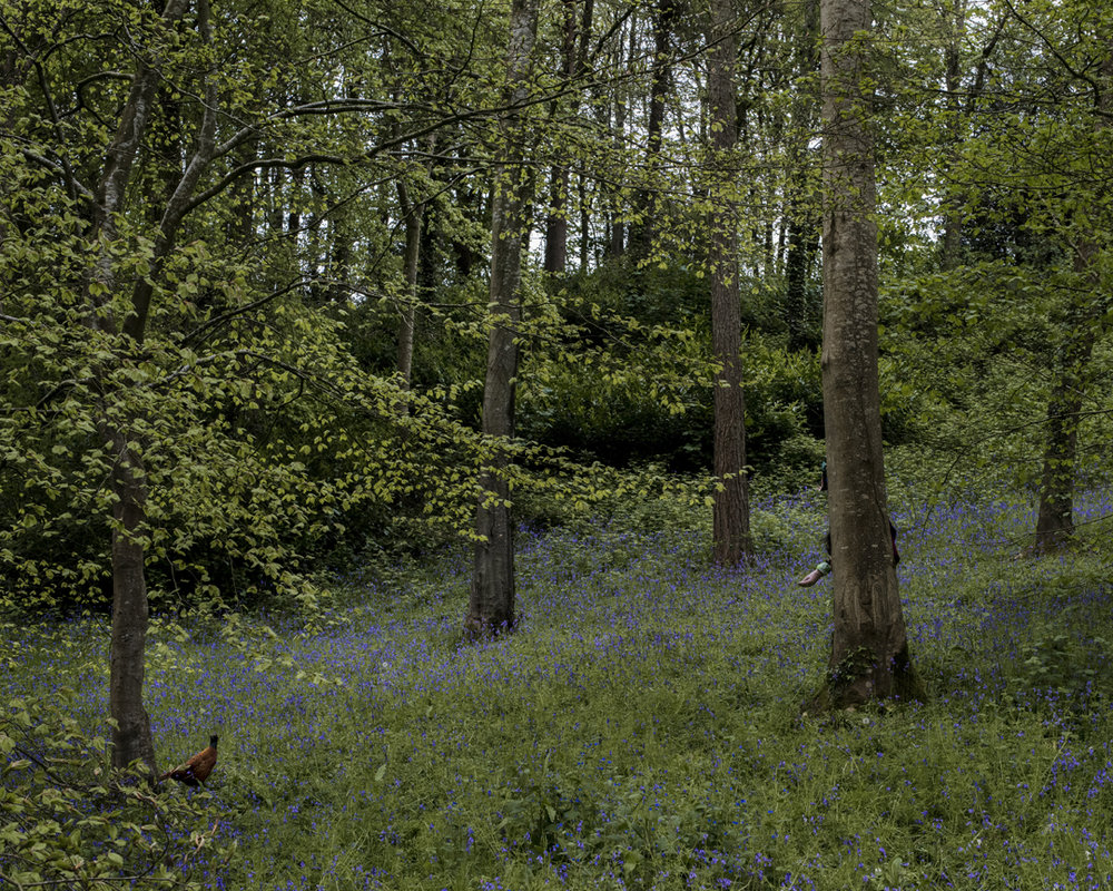 'Bluebells' from the series 'Trish Morrissey: a certain slant of light'