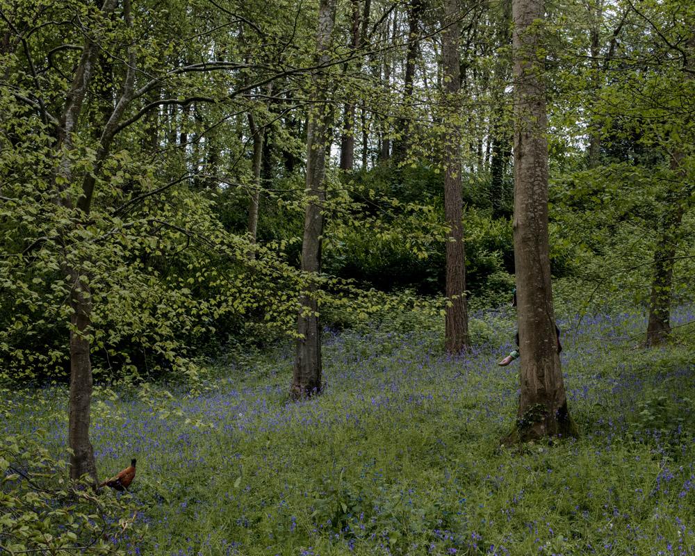 Bluebells © Trish Morrissey