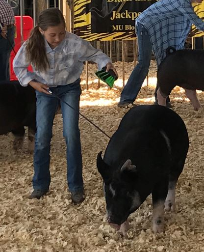 Contributed photo Olivia Boddicker, 9, of the Hoover Heroes 4-H showed her swine in Auxvasse, Mo., during a May competition. This year, the Platte County Fair will host a junior livestock show for the first time in a decade.