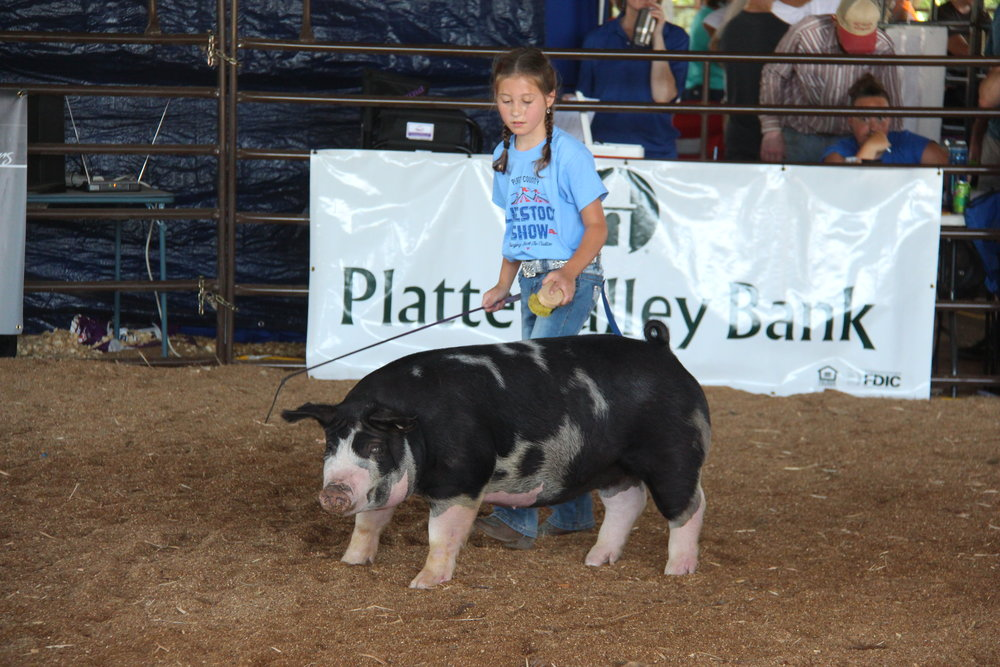 Citizen file photo Olivia Boddicker, 10, of Platte City presents her pig during the livestock show at the Platte County Fair Saturday, July 22 at the Livestock Barn in Tracy, Mo.