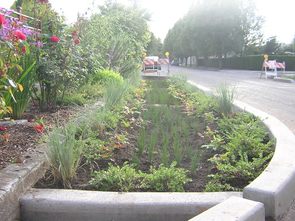 A streetside rain garden