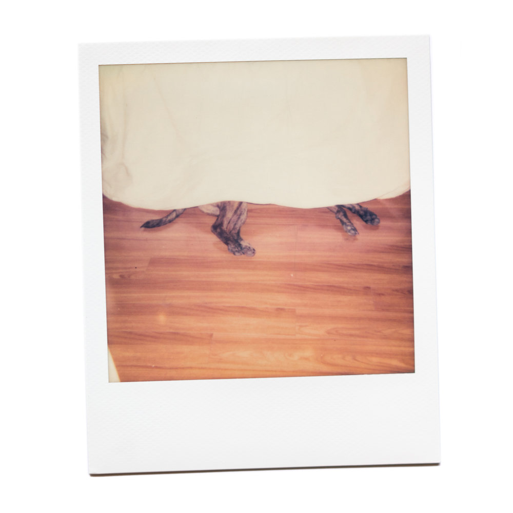 karina cruz, safe space, 2016. polaroid film.