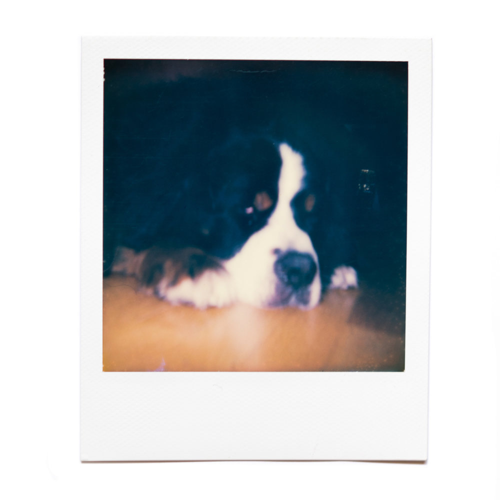 karina cruz, einstein, 2016. polaroid film.