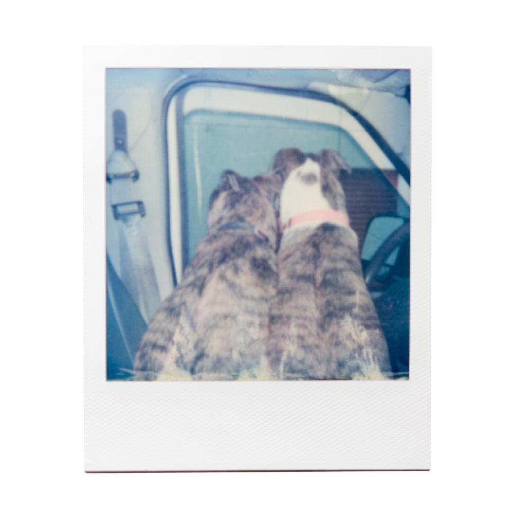 karina cruz, lake day, 2017. polaroid film.