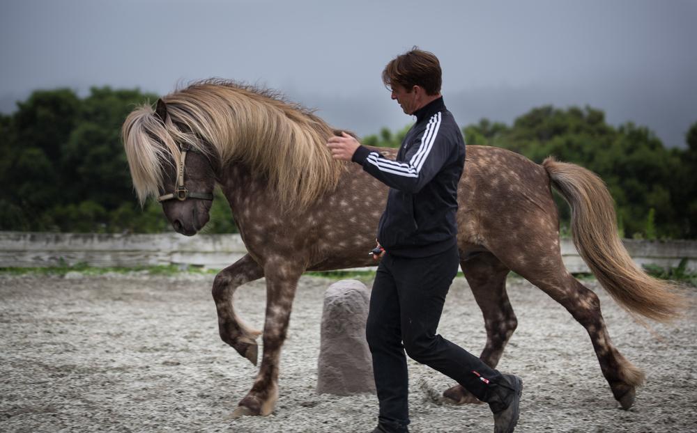 A stallion's first days