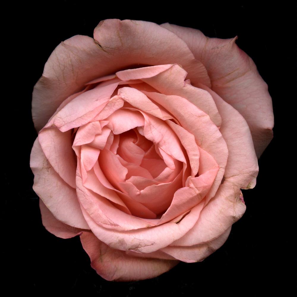 Flower Scans