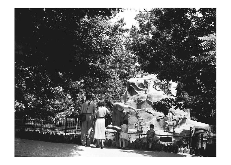 Antelope Rock at the National Zoological Park, ca 1951