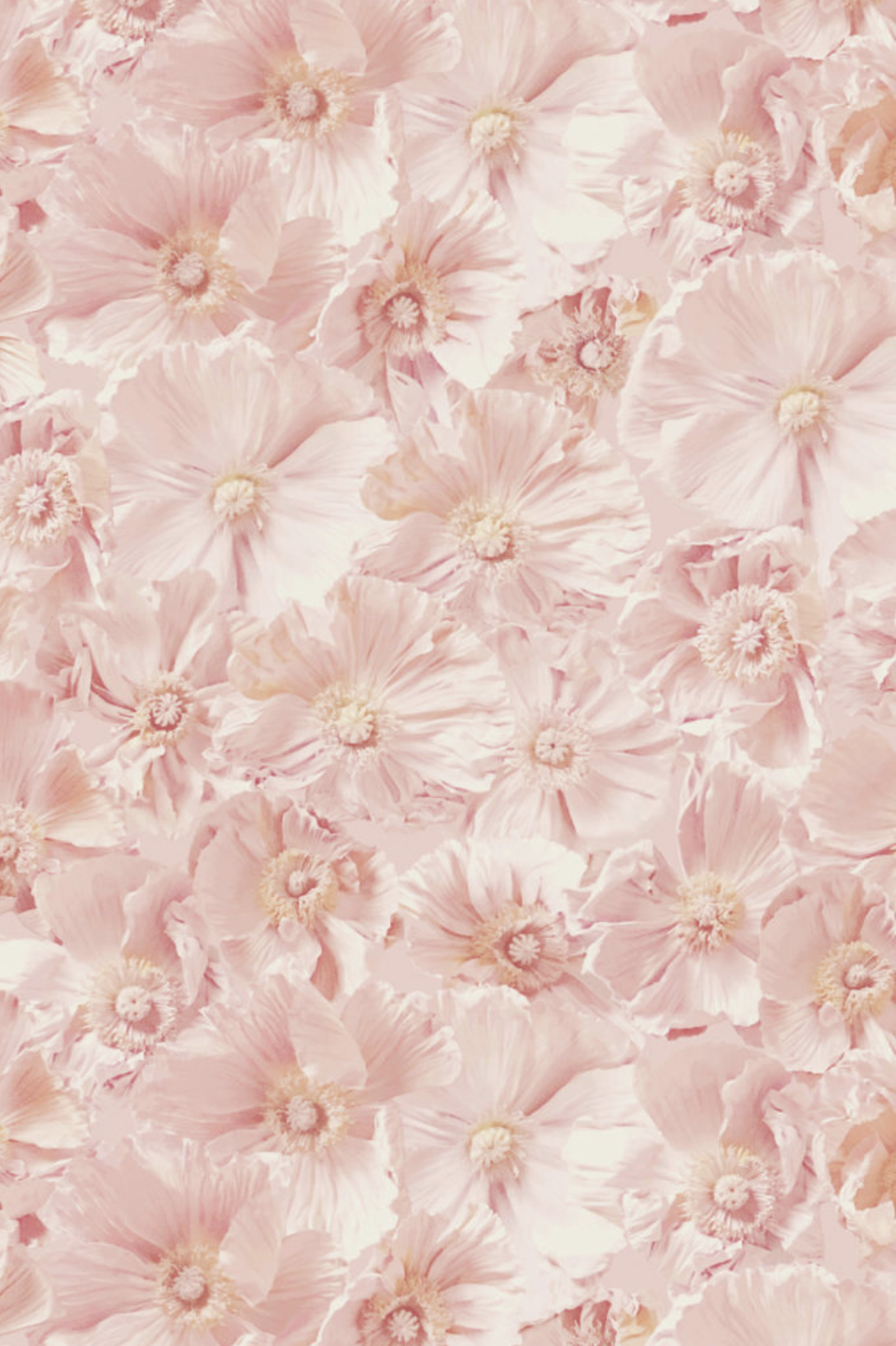 Pink Poppies detail