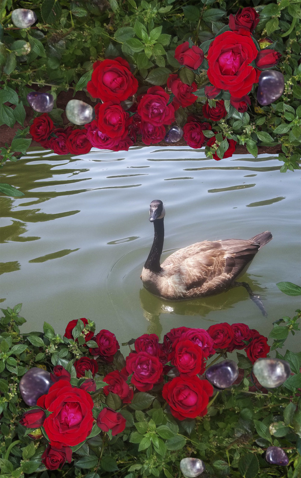 Created in Adobe Photoshop. A photo composite of five images to create a peaceful image of wildlife meets fantasy garden.