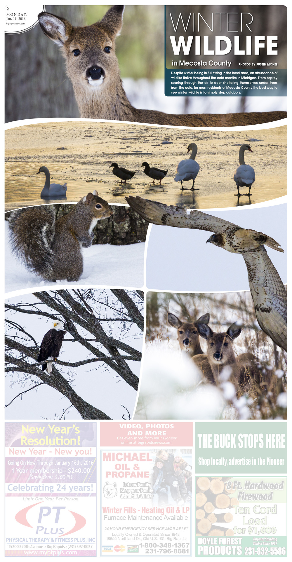 Winter Wildlife in Mecosta County
